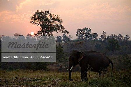 Triangle d'or, la Thaïlande, Chiang Mai, éléphants à l'aube