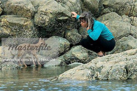 Femme essaie d'amadouer un jeune cerf à queue noire de Sitka fauve sur la terre ferme avant que la marée monte sur l'île de chevalier Johnson Bay, Prince William Sound, péninsule de Kenai, centre-sud de l'Alaska, l'été
