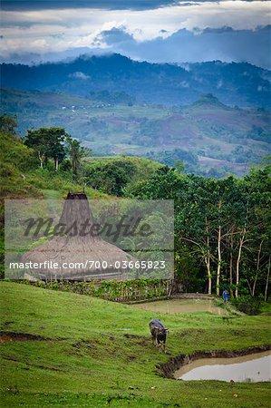 Village et le paysage, Lapale, Sumba (Indonésie)