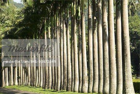 Peradeniya Botanic Gardens, Kandy, Hill Country, Sri Lanka, Asie