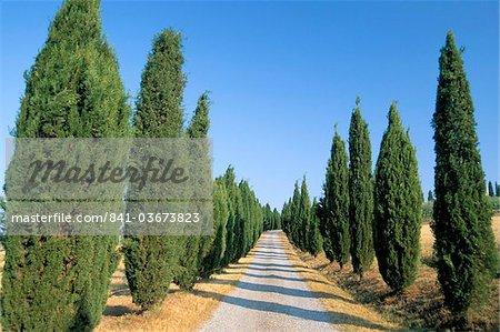 Bordée d'arbres, chemin rural, Val d'Orcia, province de Sienne, Toscane, Italie, Europe