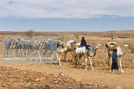 Camel caravan riding through the stone desert near Atar, Mauritania, Africa