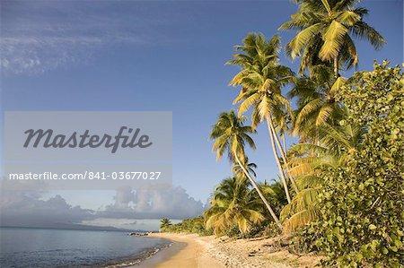 Palmiers sur une plage de sable fin, Green Beach, Vieques, Porto Rico, Antilles, Caraïbes, Amérique centrale