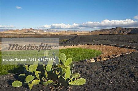 Prickly pear cactus et des cultures irriguées au milieu des pierres de lave noire, avec la ville de Soo au loin, dans le nord de l'île, Soo, Lanzarote, îles Canaries, Espagne, océan Atlantique, l'Europe