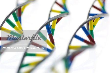 DNA (deoxyribonucleic acid) molecules.