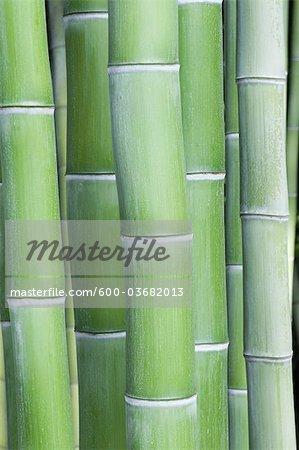 Bambus-Stiele