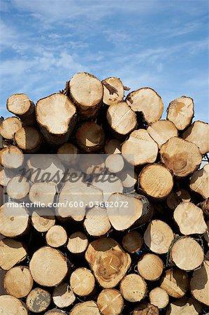 Tas de bois, Gieres, le comté de Telemark, Norvège orientale, Norvège