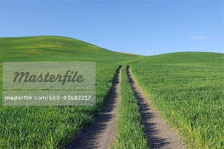 Pistes à travers les champs de blé au printemps, près de Ronda, la Province de Malaga, Andalousie, Espagne