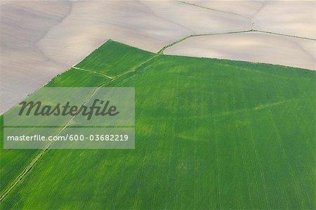 Vue aérienne du blé champ, Province de Cadiz, Andalousie, Espagne