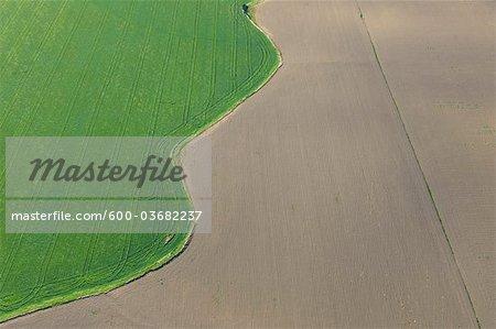 Vue aérienne du bord du blé champ, Province de Cadiz, Andalousie, Espagne