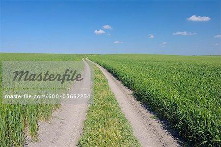 Chemins de roulement à travers les champs de blé, Andalousie, Espagne