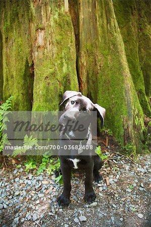Female Labrador Retriever Puppy near Tree