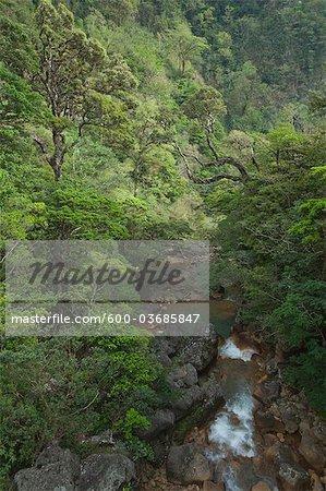 Tropical Rainforest, Miravalles, Cordillère de Guanacaste, Guanacaste, Costa Rica