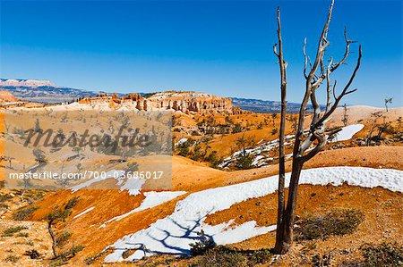 Arbre mort et paysage de grès, Parc National de Bryce Canyon, Utah, USA