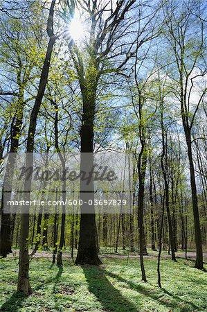 Forest, Aschaffenburg, Franconia, Bavaria, Germany