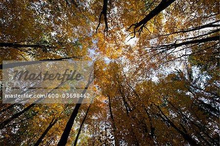 Appalachen Wald Landschaft, West Virginia, USA