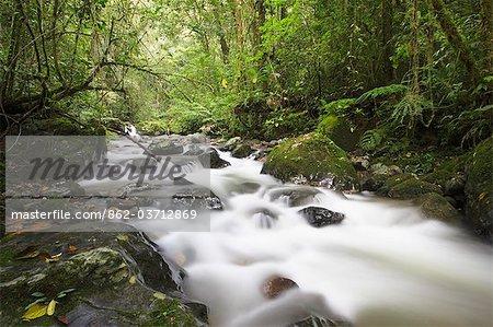 Cours d'eau dans le Parc National de Kinabalu, Sabah, Malaisie