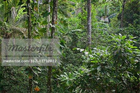 Pérou. La forêt tropicale près de la Madre de Dios River, à environ 16 km de Puerto Maldonado.