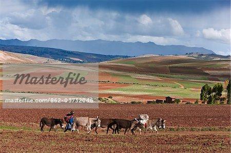 Pérou, pays Fertile agricole de haute altitude près de Maras.