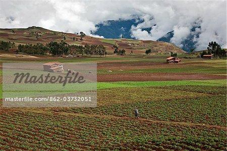 Au Pérou, un homme traverse les champs fertiles des cultures dans la riche culture des pays de la vallée de l'Urubamba.