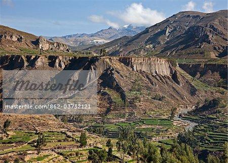 Pérou, fermes à l'aide de terrassement pré-inca dans le Canyon de Colca magnifiques avec les sommets enneigés au loin.