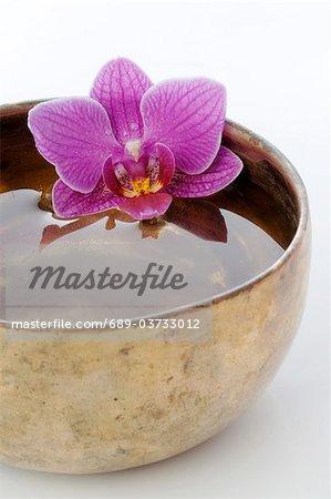 Orchidées en fleurs dans un bol avec de l'eau