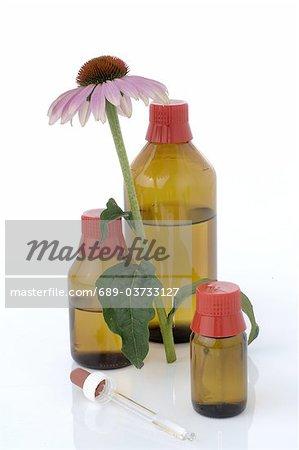 Echinacea basé médecine