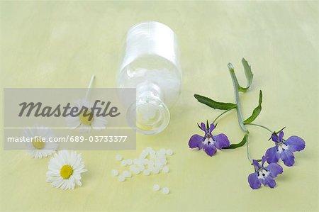 Marguerites, globules et lobelia bordure