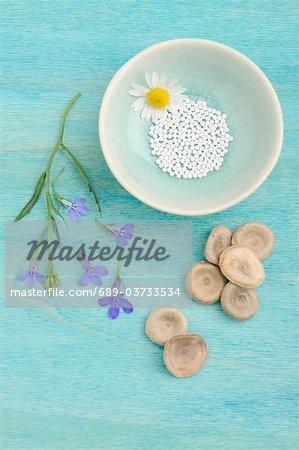 Globules, les fleurs et les champignons