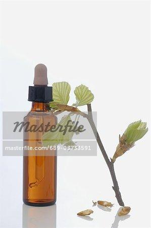 Bach hêtre fleur rouge (Fagus sylvatica)