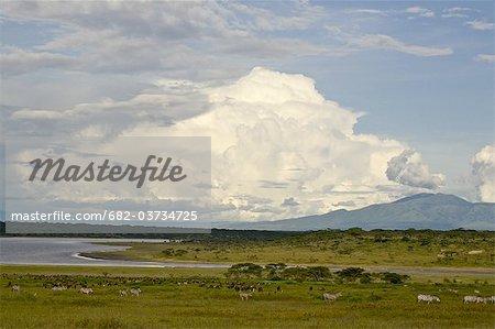 Offre une vue sur le lac Ndutu au Mont Lemagrut, Serengeti en Tanzanie