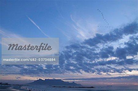 Troupeau d'Afrique Ibis sacré (Threskiornis aethiopicus) après le coucher du soleil, Big Bay, Bloubergstrand, Cape Town, Western Cape Province, Afrique du Sud