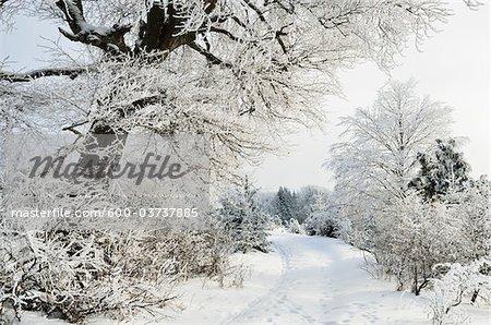 Winterlandschaft, in der Nähe von Albstadt, Schwäbische Alb, Baden-Württemberg, Deutschland
