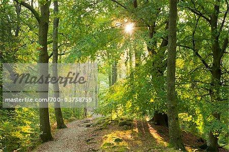 Path Through Forest, Keswick, Cumbria, England