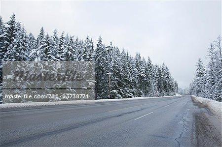Route et forêt, près de Hope, en Colombie-Britannique, Canada
