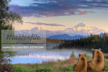 Sau und Cub Braunbären über kleine See suchen und Anzeigen von Mt. McKinley bei Sonnenaufgang, South Central Alaska, Herbst, COMPOSITE