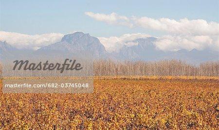 Automne vignobles avec des montagnes, près de Worcester, Province occidentale du Cap, en Afrique du Sud