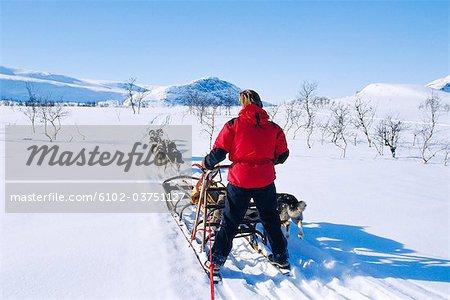 Man behind a dog sledge, Saltoluokta, Lappland, Sweden.