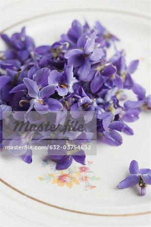 Fleurs violet sur plaque