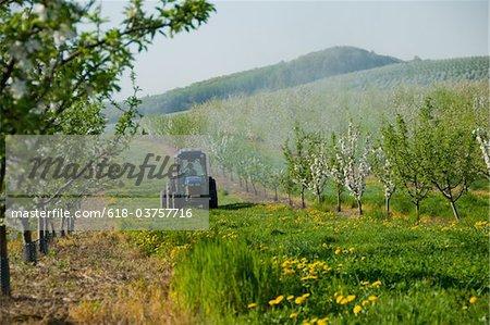 Landwirt Spritzen Obstgarten mit Pestiziden