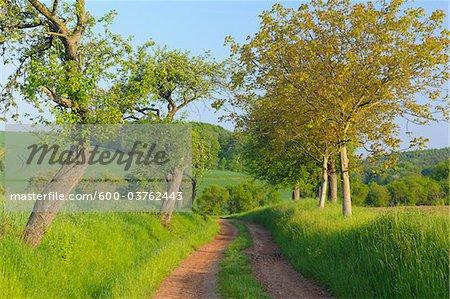 Dirt Road in Spring, Grossheubach, Spessart, Bavaria, Germany