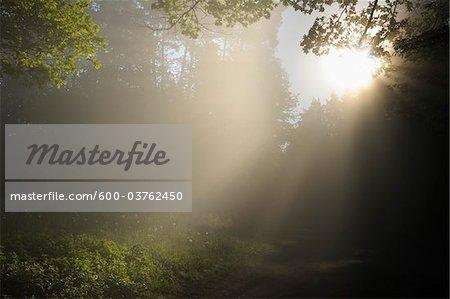 Sun Shining into Forest Clearing, Busenberg, Pfalzerwald, Rhineland-Palatinate, Germany