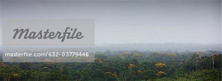 Amérique du Sud, région amazonienne
