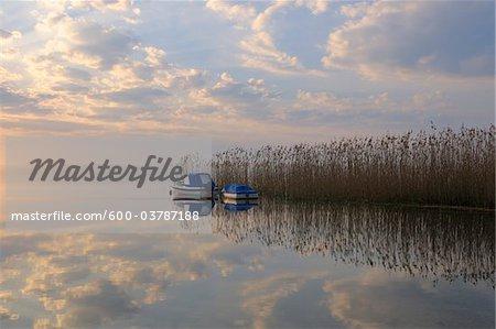 Les bateaux amarrés de roseaux au lever du soleil, voir Plauer, Plau am voir, lacs mecklembourgeois, Mecklembourg-Poméranie occidentale, Allemagne