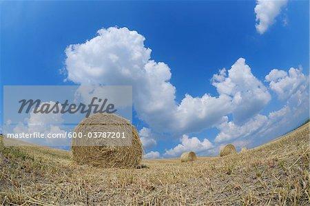 Bottes de foin dans les champs, Pienza, Val d'Orcia, Province de Sienne, Toscane, Italie