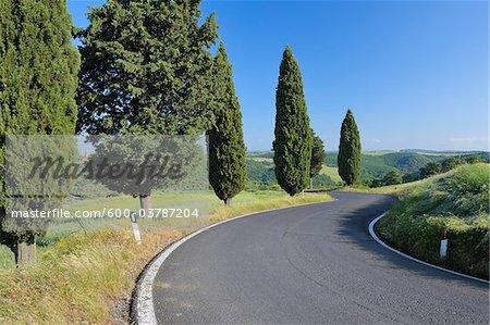 Wicklung Straße, gesäumt von Zypressen, Val d ' Orcia, Provinz Siena, Toskana, Italien