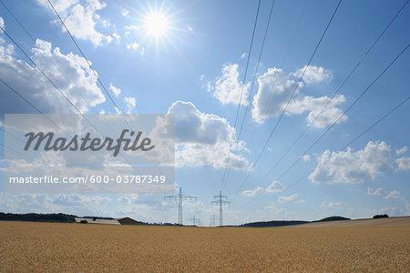 Wheat Field in Summer, Marktheidenfeld, Bavaria, Germany