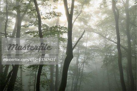 Wald, Calmont, Bremm, Mosel River, Cochem-Zell, Rheinland-Pfalz, Deutschland
