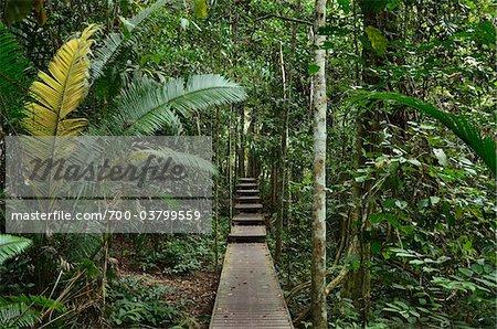 Promenade à travers la forêt tropicale, le Parc National Taman Negara Pahang, Malaisie