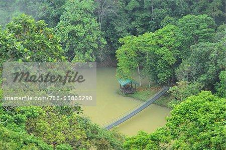 Bridge over Water in Rainforest, Sepilok Rainforest Discovery Center, Sabah, Borneo, Malaysia
